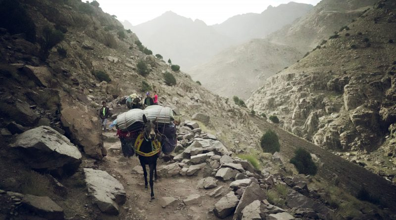toubcal, mountain, donkey, mule, hikers, hiking, trekking